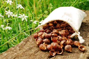 soapnuts_11